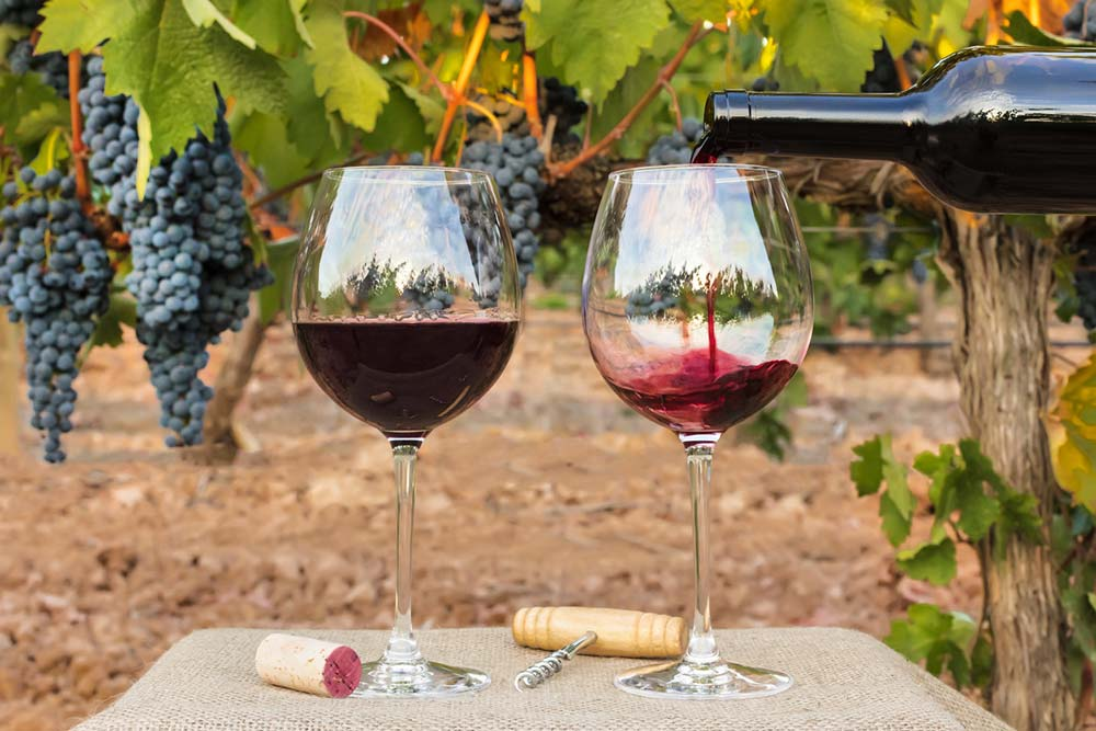 Extra Cool Instruments For Wine Importers